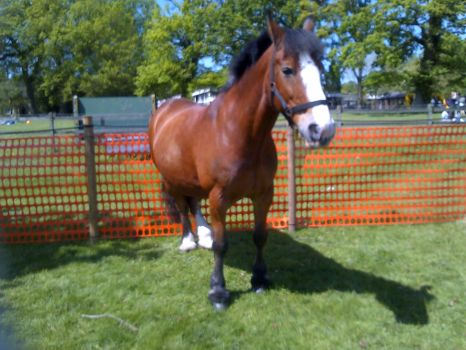 Horse by Photo55jacob