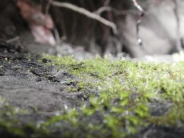 Mossy Ledge 7 by DeadHeadStock