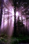 Purple Morning by Temperate-Sage