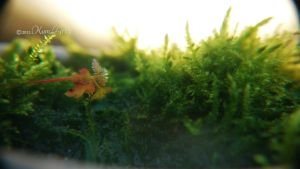 Moss~fairytale~ by kumArts