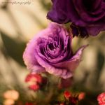 deep purple by evenliu