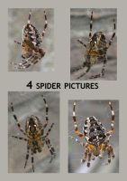 Itsy Bitsy Spider Pack by empty-paper-stock