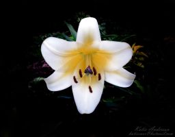 Lily's Flower Drips by lucyfurr66