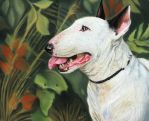 White Bull Terrier by Annasko