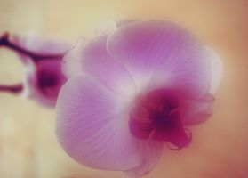 orchid 4 by FreedomeSoul88