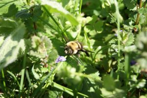 large view crazy bee by deirdrebardowl