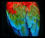 Colourful.. by wiltz