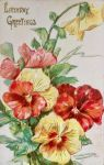 Pansy Delights by Yesterdays-Paper