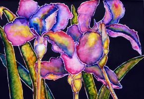 Irises by AnnMarieBone