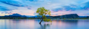 Lonely Tree,  Lake Wanaka by TahaElraaid