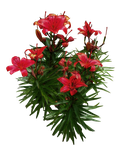 Red Lilies PNG.. by Alz-Stock-and-Art