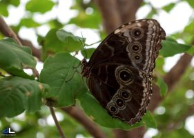 Butterfly Moment...resting by imonline