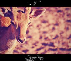 deer2 by pure52hart