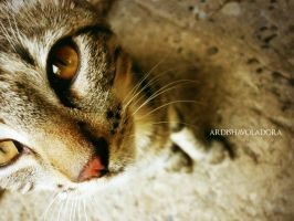 curious cat by ARDISHAvoladora