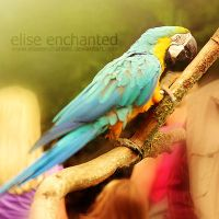 Tropical colour by EliseEnchanted
