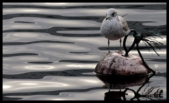 Stranded Seagull by Jacon