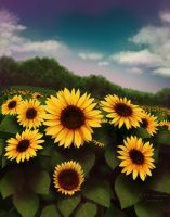 Sunflower Field by mytiko-chan-is-back