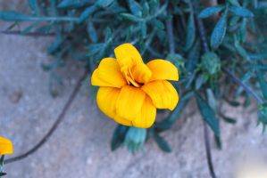The Yellow Flower by Newway12