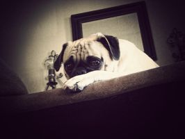 Relaxing Pug by garnettrules21