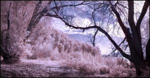 Wolni Lake pano infrared... by MichiLauke