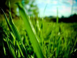 grass by tash-to