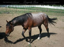 quarter horse stock 23 by tragedyseen