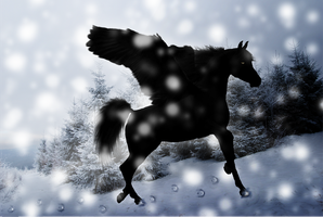 Black Pegasus in Snow by Dream-Vizsla