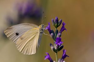 July Butterfly VI by dalantech