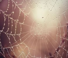 A spider web by cucumber-love