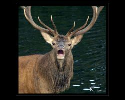 the real Monarch IV by kilted1ecosse