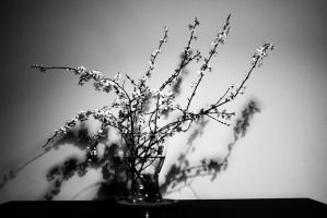 plum branches by paracats