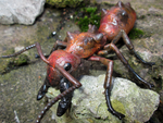 Fallout Fire Ant. by APlaceForStuff