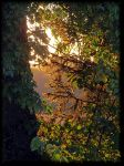 Sunny evening... by Yancis