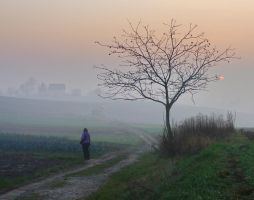 Lost in the fog by starykocur