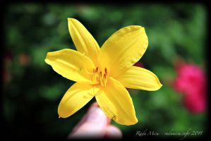 A Yellow Flower for You by Zamolxes