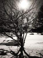 The Snow Tree (RS) by kandroid96
