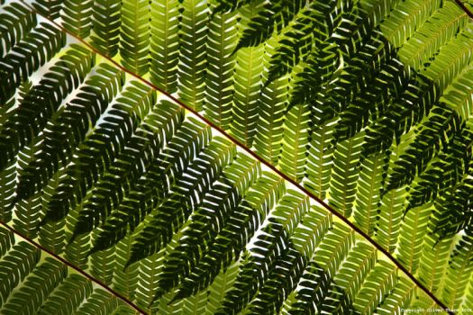 Fern Leaves by i-have-a-face