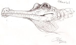 Gharial by MetalReaper