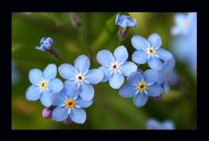 forget me not by nicolehg