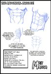 The Abdominal Muscles! by Max-Manga
