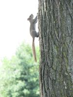 Squirell running up a tree by TheEndWhereIBegin