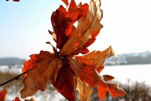 Winter fall by JohshuaD