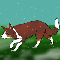 Snow can't stop a herder by Alcemistnv