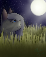 Cinderpelt by MuffinSpice