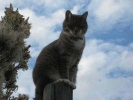 Cat on Pole 2 by Caseybar