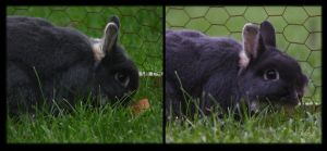 Rabbit in long grass by henzunducks