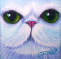 Green Eyed White Persian by carefulwhatyawishfor