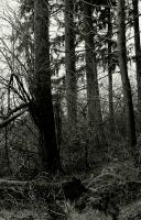 The Woods... by thewolfcreek