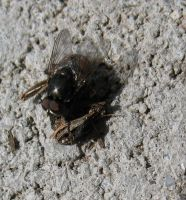 Fly close up by Critterinthedryer