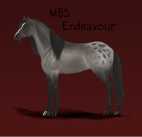 MBS Endeavour by Minging